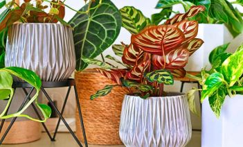 6 plantas de interior que no necesitan luz natural