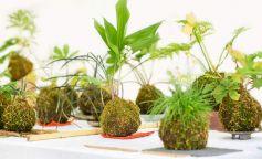 Kokedama la técnica japonesa para decorar con plantas tu hogar