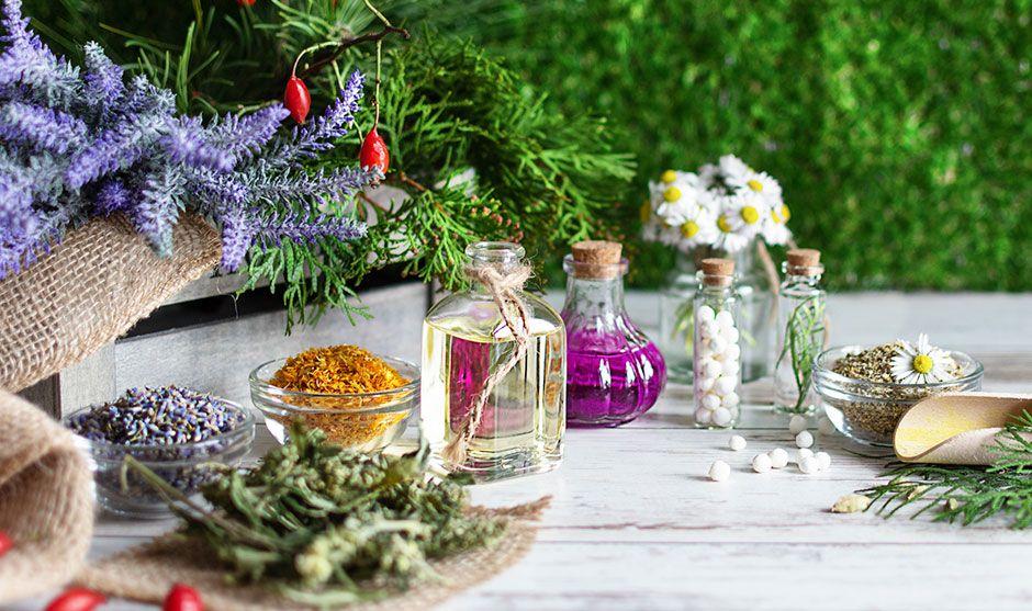 El poder y los beneficios de las plantas medicinales