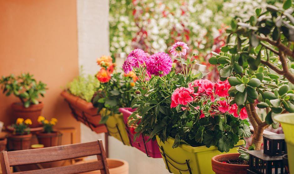 Las flores de primavera que no pueden faltar en tu balcón