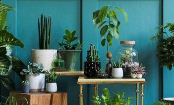 Cómo cuidar las plantas de interior sin que mueran en le intento