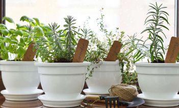 Un rincón natural en tu propia cocina las mejores plantas aromáticas de interior