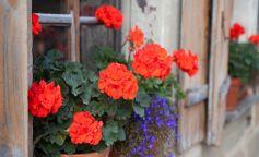 Cuidados básicos para que tus plantas sobrevivan al calor del verano