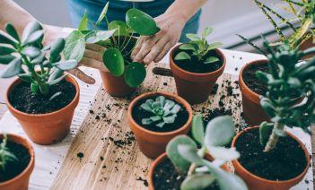Este verano, terraza con plantas y libre de insectos