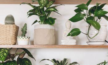 Cómo crear un pulmón verde en casa