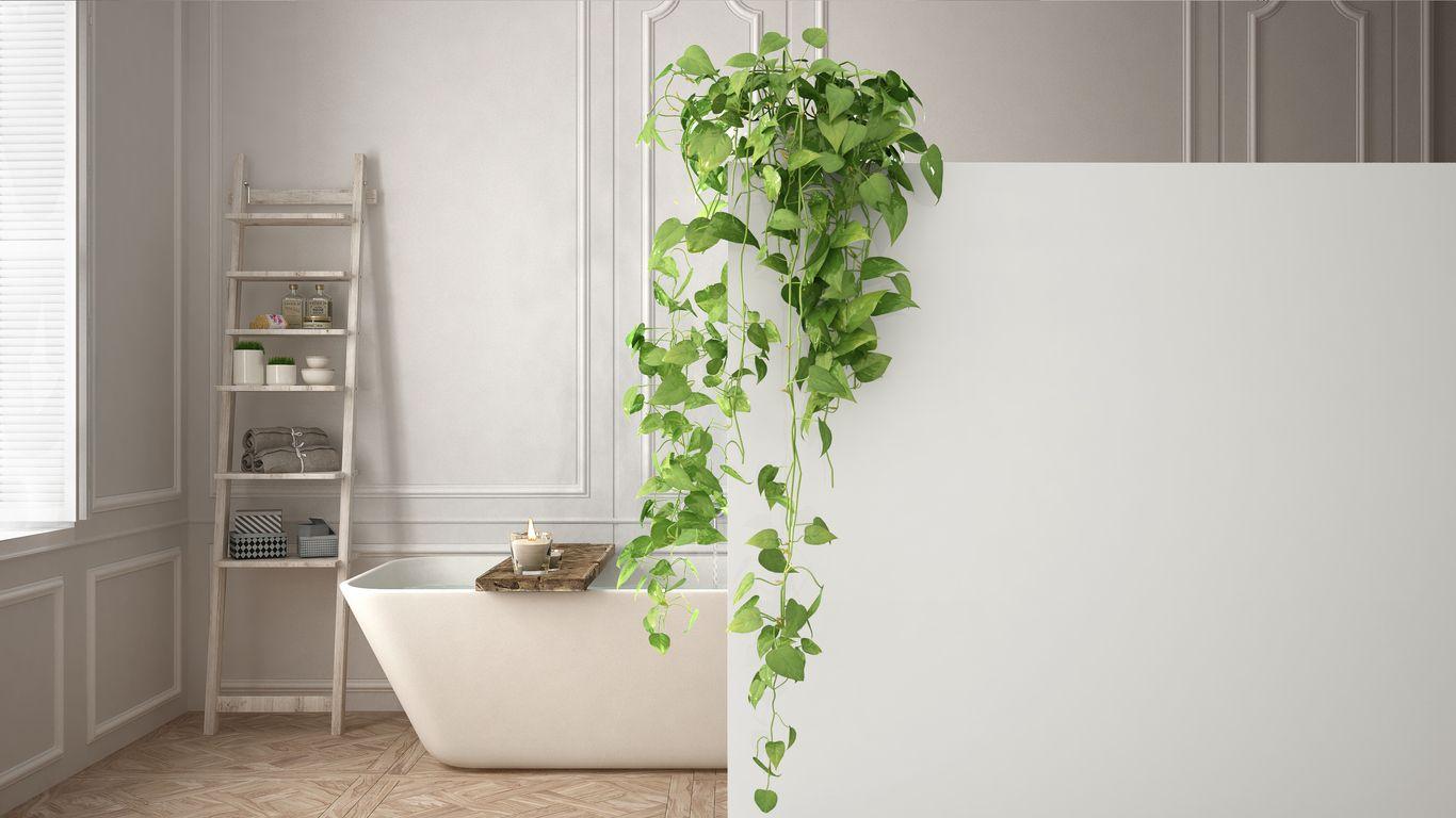 Plantas de interior para decorar el baño