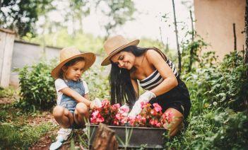 Plantas antimosquitos para el jardín