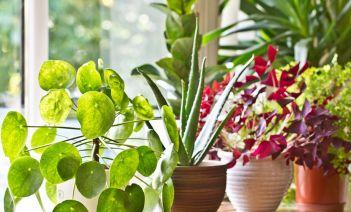 plantas verano