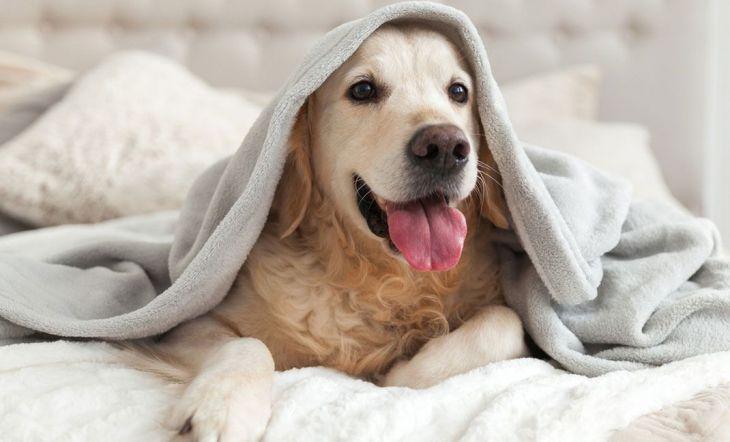 perro casa