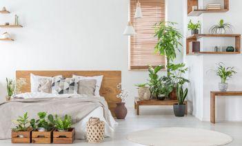 Plantas que absorben el calor de tu casa
