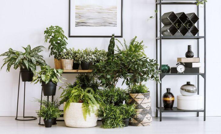 Plantas en pisos millenial