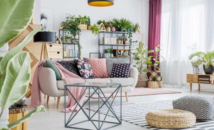 Cómo mantener limpias las plantas de interior (2)