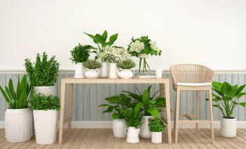 Cómo cuidar las plantas de interior en invierno