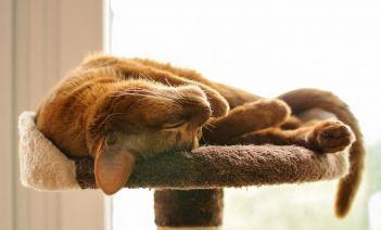 5 ideas para gatificar tu casa y hacer más feliz a tu gato