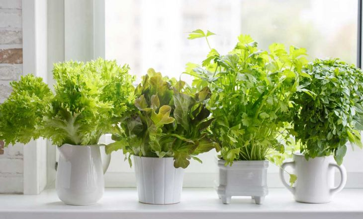 6 plantas para crear tu propio jardín medicinal en casa