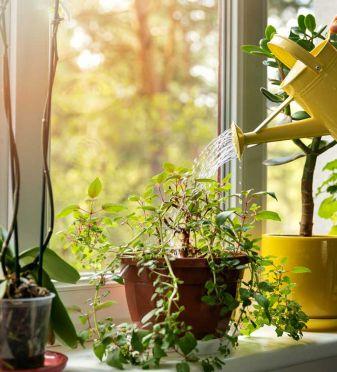 Cómo evitar que las hojas de las plantas se vuelvan amarillas
