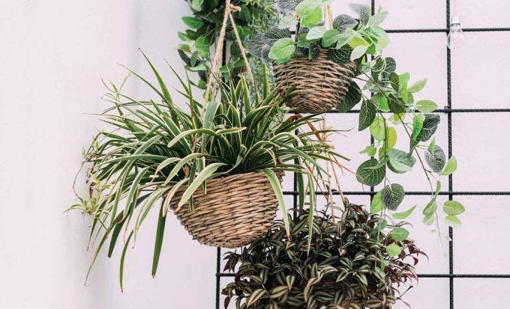 Los 8 mejores plantas colgantes con las que decorar tu casa