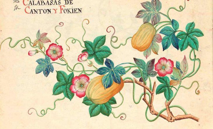 """""""Entre manila y cantón"""": una muestra sobre el esplendor del arte botánico de Asia"""